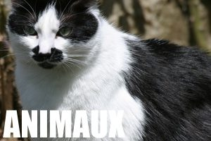 Petites annonces gratuites animaux à vendre en Vendée